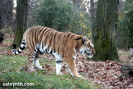 bronx zoo nocturnal animals