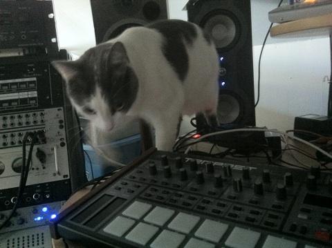 Cat on Tempest