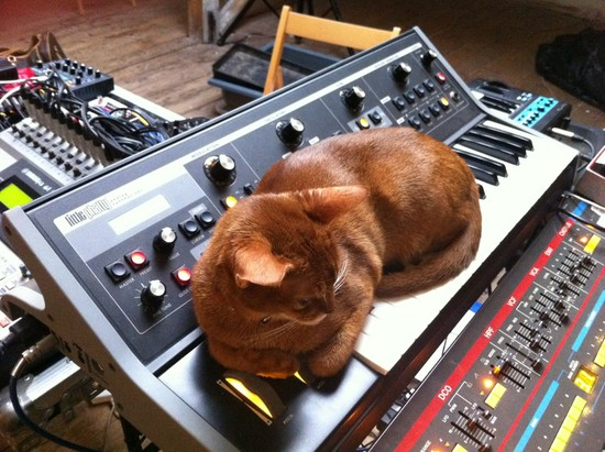 Cat and Moog Little Phatty