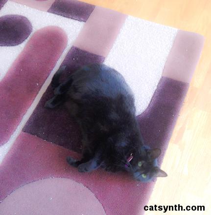 Luna rolling on the carpet