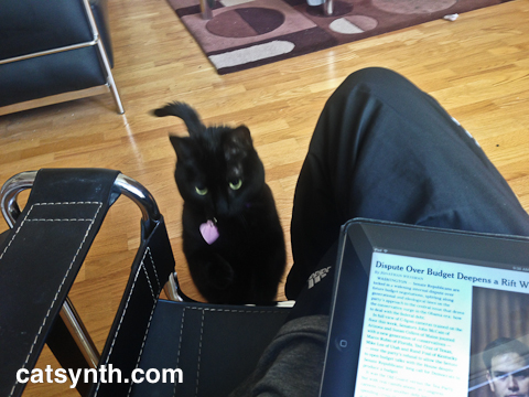 Luna looks for attention while the author reads the newspaper