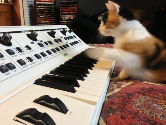 Cat with Moog Little Phatty