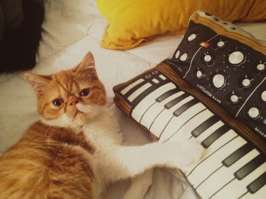 Cat and Softmachines Pillow