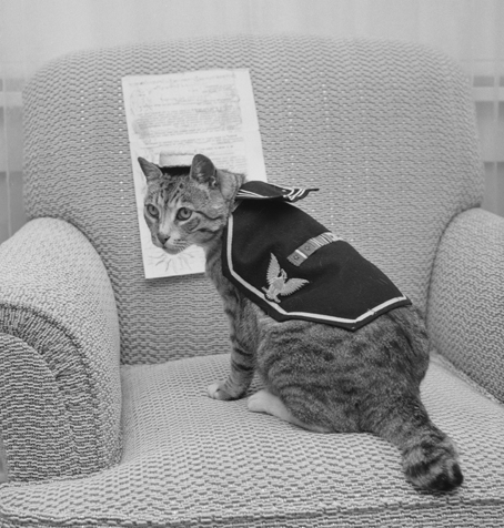 Pooli, a US navy ship cat from World War II