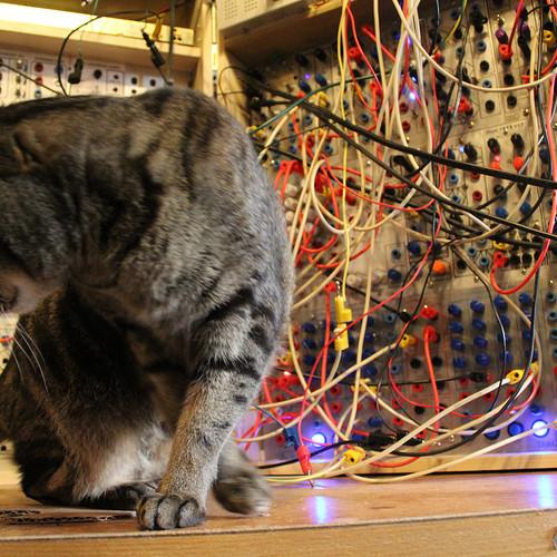 Cat and Serge Modular