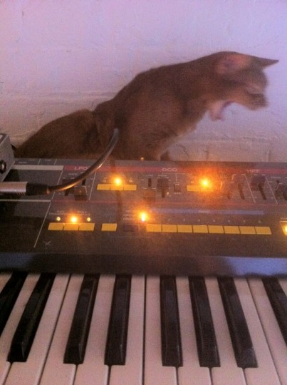 Puffystudiocat and moog