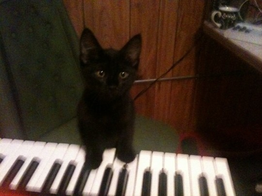 black kitten and keyboard
