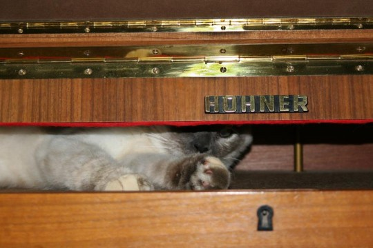 Cat with Hoehner Electra Piano