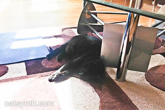 Luna resting
