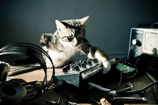 Cat with Moog Minitaur
